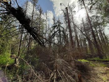 Droogte in bossen-Biodiversiteit